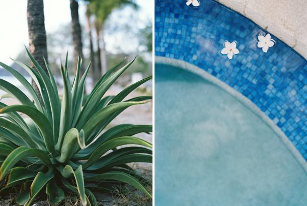aloe pool plumeria Costa Rica